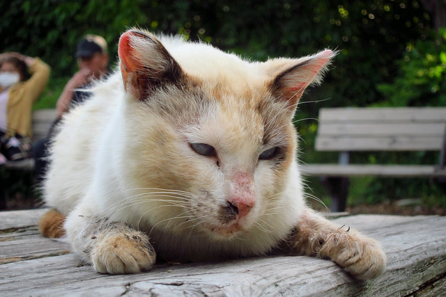 Today's Cat@2012-05-12