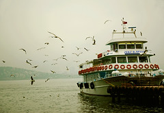 the sea isn't blue**    (Saeedeh (Sormeh)) Tags: bird ship seagull istanbul