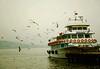 the sea isn't blue** دریا آبی نیست (Saeedeh (Sormeh)) Tags: bird ship seagull istanbul مرغ کشتی دریا دریایی استانبول