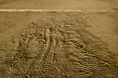 Path Well Traveled (Paul Aparicio) Tags: travel walking path footprints ground dirt worn imprints tiremarks bikemarks