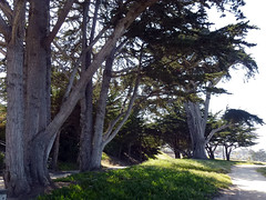 Pacific Grove 5-7-12 (18) (Photo Nut 2011) Tags: pacificgrove california monterey berwickpark