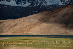 Herds of sheep and goats (Alex Treadway) Tags: india lake snow mountains color colour ice wool water rural standing landscape outside outdoors photography milk asia day sheep coat farming horns environmental goat scene meat hills goats curly pasture valley mind lamb labour environment tibetan remote pashmina cashmere farmer agriculture himalaya pastoral fleece eastern livestock mammals hardwork herd naturalworld himalayas isolated highup grazing mutton scenics himalayan ladakh highaltitude traditionalculture tending supervise flockofsheep jammuandkashmir tend groupofanimals traveldestinations beautyinnature bodyofwater lookafter animalthemes pastoralist indigenousculture hoovedanimals