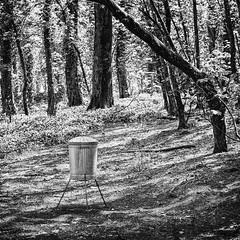 Tough Times, Alien Cut Backs - Caerhayes Castle, Cornwall. (johnlunt) Tags: uk blackandwhite bw west castle monochrome mystery digital square lens landscape photo spring woods solitude cornwall forrest image zoom britain mark country surreal scene humour ii 5d 70300mm idyllic tranquil escapism tranquillity lunt caerhayes 5dmk2