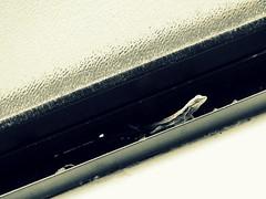 sally (Star Tornero Photography (LaikazEyes)) Tags: blackandwhite bw sunlight texture blancoynegro window glass animal metal reptile small bn sally fullframe uncropped sil dsc01006 treelizard obliquemind obliquamente laikazeyes