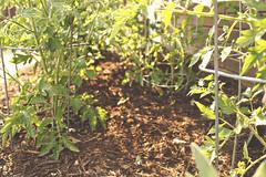 Garden (miss jamie elizabeth) Tags: green blog herbs tomatoes grow mint indiana fresh sage basil organic veggies thyme homegarden yoursistheearth