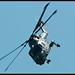 27th May 2012 - Lynx HMA8