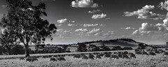 Dookie (Andrew Fleming Photography) Tags: trees landscape sheep australia andrew victoria silo hills dookie fleming andrewfleming goulburnvalley centralvictoria mountsaddleback greatershepparton