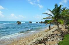 Bathsheba (Jack Parrott) Tags: 2 gardens botanical islands nikon surfing explore beaches barbados caribbean oceans bridgetown bathsheba atlanticocean soupbowl d90 lostfilm seauguesthouse