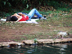 Caught (Up in the Moment) (osvaldoeaf) Tags: brazil portrait people love water brasil duck couple candid young reflexions goinia gois