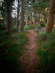 Follow Me... (Peter Knott) Tags: trees newzealand tree forest landscape path olympus trail treetrunk nz nik e3 zuiko gitzo zd 1260mm gt2542l