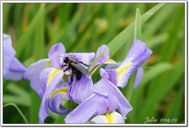 紫藤、老梅 (32)
