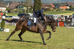 DSC00134_s (AndiP66) Tags: horse sports sport schweiz switzerland sony may mai alpha concours pferd equestrian solothurn ch horsejumping wettbewerb 2016 springen auffahrt f456 kantonsolothurn pferdesport sonyalpha springreiten andreaspeters wolfwil cantonofsolothurn pferdespringen sony70400mm 77m2 sal70400g2 sony70400mmf456gssmii a77ii ilca77m2 77ii 77markii slta77ii auffahrtspringen 5mai2016