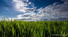 Grassteppe (fran.fotographix) Tags: natur felder himmel wolken gras grn frhling