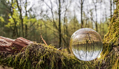Green Crystal Ball (martijnvansabben) Tags: trees holland macro reflection tree green nature netherlands glass forest ball woodland outside outdoors effects whatevertheweather cool woodlands crystal nederland olympus olympuspen lightroom naturephotography greenisgreen getolympus olympuseurope