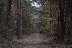 A Walk in the Old Park (JokerKingPhotography) Tags: statepark park old trees red wild orange plants cloud plant color detail tree green fall nature colors beautiful beauty forest dark season outside outdoors photography grey photo leaf amazing woods nikon mine pretty peace photographer seasons tn earth path walk tennessee details picture evil peaceful overcast calm treetops haunted creepy adventure teen photograph leafs mothernature coluds scarry freelance detailed pease senic thebigpicture groundview naturelovers goodvibes falltime freelancephotographer teenphotographer youngphotographer naturessong academylife nikond3300 jokerkingphotography
