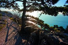 Trieste (Camper & Nicholsons Marinas) Tags: roccia sentiero albero carso