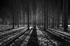 StrangeGlow (Tony Tooth) Tags: trees blackandwhite bw lines nikon wideangle tamron oxfordshire lowerheyford d7100 1024mm
