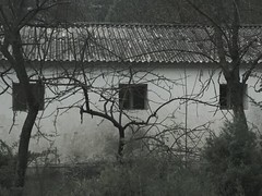Mysterious house Abandoned Buildings Blackandwhite Dry Trees Creepy Photography Nature Windows Photographer Wood Darkness Contrast Taking Photos Writing With Light (fabiola_justo) Tags: wood trees windows blackandwhite nature contrast photography photographer darkness dry creepy takingphotos abandonedbuildings writingwithlight