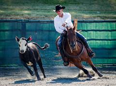 ARCHA Willow Brook 6-26-2016-10 (Webbed Foot Photo) Tags: horses horse pennsylvania archa webbedfootphotography willowbrookfarms pentaxk1 darrenolsen dtolsen webbedfootphoto