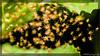 Hatches (kelvinj_funlab) Tags: macro nikon spiders bugs malaysia tamron perlis kenkoextension d810 funlab nissini40 kelvinjong tamron90mmf28spdimacro11vcusd