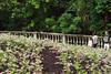 Flower Field (Ken Ng Photography) Tags: park family singapore tropical historical fertilizer fertiliser bougainvilleas