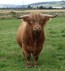 ταύρος /  Bull (Taurus) by Brian M. Forbes