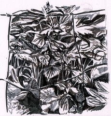 On the bench # 3 - 'Through the Wire' (Jim_V) Tags: park plant ink sketch break lunchtime doodle islington brushpen onthebench