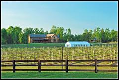 New Kent Winery for fence Friday (sjb4photos) Tags: fence virginia hff newkentcounty newkentvirginia newkentwinery fencefriday