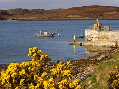 """""""The path ends here, boy."""" (lev) Tags: morning flowers sea sunlight man water grass yellow landscape boats coast scotland crane sunny rope hills ropes loch dailylife sunlit buoys westernisles slipway buoy isleoflewis hebrides aday gorse may15 15may lochleurbost 15thmay"""