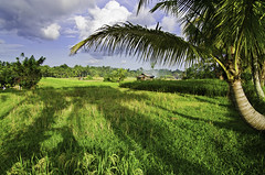 Ubud Countryside (syukaery) Tags: 1755mm