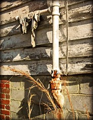 Drain Pipes, Old Wash Rags and Broom Straw:  Edgecombe County, NC (EdgecombePlanter) Tags: old abandoned rural nc weeds shadows sad rags decay pipes plumbing oldhouse vacant peelingpaint darkshadows lateafternoon edgecombe unoccupied deepshadows broomstraw