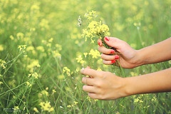 Delicate things (Yavanna Warman {off}) Tags: flowers woman plants flores verde girl field grass 50mm mujer hands plantas soft chica dof bokeh manos amarillo nails campo f18 delicate campestre hierba redyellow delicadeza handsart yavanna yavannawarman