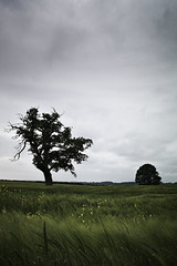 Another Place, Another Time (ReportageImages) Tags: leica trees england landscape 28mm somerset summicron crops breeze m9