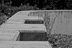 Cement Benches at First People's house, University of Victoria (Alejandro Erickson) Tags: blackandwhite bw bench cement barrier uvic universityofvictoria