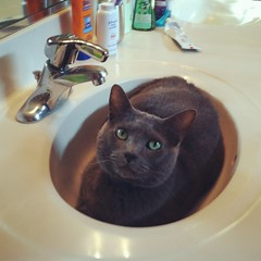 Picture 1201 (khami6cr) Tags: sink gus graycat guster