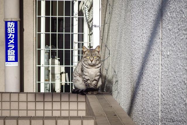 Today's Cat@2014-04-01