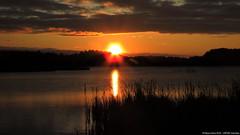 Sunrise - Lower Pool (Steve Arena) Tags: bird birds massachusetts marsh volunteer concord usfws 2016 middlesexcounty marshbird marshbirds lowerpool gmnwr concordimpoundments marshbirdsurvey marshbirding