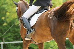 IMG_1408 (dreiwn) Tags: horse pony horseshow pferde pferd equestrian horseback reiten horseriding showjumping dressage reitturnier dressur reitsport dressyr ilsfeld dressuur ridingclub junioren ridingarena pferdesport springreiten reitplatz reitverein dressurreiten dressurpferd dressurprfung tamronsp70200f28divcusd jugentturnier