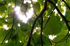 Heart Leaf (JustinMullenPhotography) Tags: trees light wild sky plants sun abstract tree cute green love nature beautiful loving clouds outdoors spider washington leaf backyard warm heart natural background branches web sunny leafs twigs