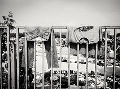 #streetart #streetphotography #urban #urbanart #urbanphotography #photography #romanjskiphotography #portraitphotography #streetportrait #blackandwhite #blackandwhitephotography #blackandwhitestreetphotography #phoneography #streetphotographyserbia #idont (A-Roma) Tags: life urban blackandwhite bw streetart photography streetphotography lifestyle streetportrait follow urbanart blackandwhitephotography photooftheday urbanphotography followme portraitphotography lifeinblackandwhite bwstreet lifeonthestreets photobw blackandwhitestreetphotography phoneography monoart followforfollow streetsofserbia instatags4likes streetphotographyintheworld romanjskiphotography idonthavetalentihaveagoodcamera streetphotographyserbia