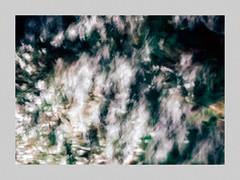 Winter Bloom (Andrew_Dempster) Tags: flowers abstract flora au australia impressionism southaustralia icm iphone nativeflora athelstone iphone5 incameramovement incameramotion wadmorepark
