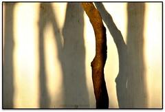 Ombres minimalistes de Palafrugell (Jess Cano Snchez) Tags: espaa canon spain catalonia catalunya catalua eos20d ampurdan emporda espanya palafrugell tamron18200 baixemporda bajoampurdan elsenyordelsbertins gironaprovincia