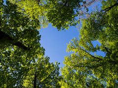 When nature shapes itself (Mahmoud Abuabdou) Tags: vienna wien travel blue summer sky tree green love nature yellow austria sterreich spring angle heart low perspective olympus hike explore jungle tor tiergarten wander omd oesterreich em1 lainzer