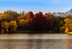 The elements (Stefan Machita) Tags: park trees brown lake color verde green fall nature water beauty leaves canon freedom natural earth air lac natura romania aer toamna apa dslr parc bucharest bucuresti herastrau maro copaci culori frunze libertate pamant frumusete 700d
