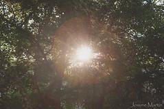 Nunca la pierdas d vista.... (Josune Martin) Tags: verde luz arbol rayo resplandor solhojas