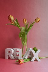 Relax #1, 2016 (Lexi Blue) Tags: pink stilllife orange flower green relax rosa objects stilleben tulip colored grn stillife blume arrangement bunt abstrakt arranged tulpe gestaltung gestaltet angeordnet objektfotografie arrangiert arrangedobjects canon6dmark3