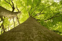 Up (petia.balabanova) Tags: travel light plant tree green nature up switzerland ticino svizzera albero 1735mm nikond800