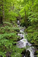 Schwarzwald-Wildniss (vivalatinoamerica) Tags: wasser sommer natur wiese bach grn fluss wald bume schwarzwald freizeit wandern schlucht erholung gebsch wolfsschlucht todtnau gewsser wildniss