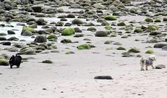 Ventura Beach (Robert Borden) Tags: california travel green beach dogs nature wet canon outside sand waterfront stones shore venturabeach ventura
