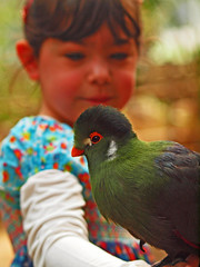 Alina and the Taurako (Andy von der Wurm) Tags: holland verde bird nature netherlands animal fauna zoo child landgraaf young nederland kind granddaughter alina tier vogel limburg niederlande kerkrade mondo dierenpark enkelin hobbyphotograph mywinners wereldtuinen platinumfoto ringexcellence taurako andreasfucke